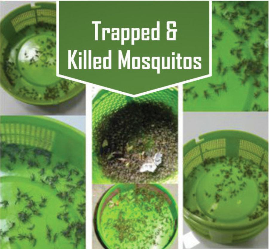 mosquito-trap-11